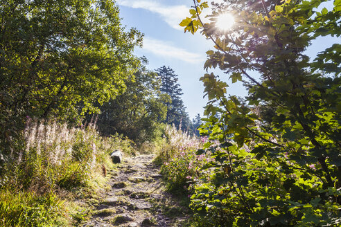 Germany, Baden-Wurttemberg, Black Forest, Rocky hiking path - WDF04290