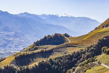 Switzerland, Valais, Montagnon, vineyards - WDF04303