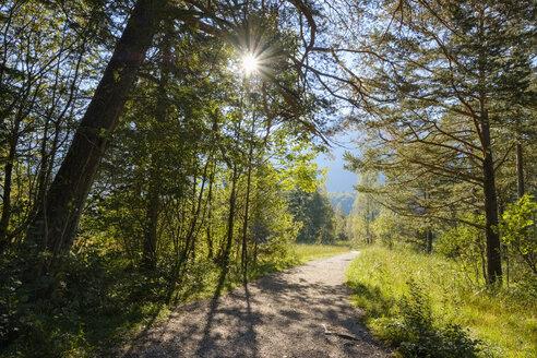 Germany, Bavaria, Allgaeu, forest path near Schwangau - SIEF07660