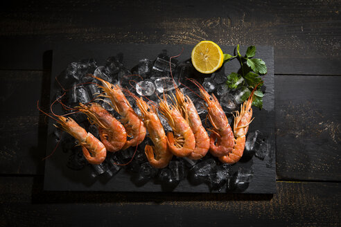 Argentine red shrimps on ice - MAEF12479
