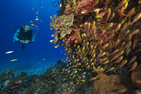 Egypt, Red Sea, Hurghada, scuba diver at coral reef - YRF00171