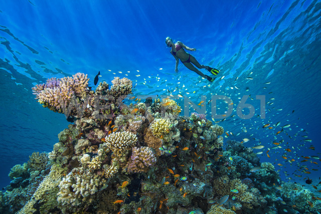Egypt, Red Sea, Hurghada, young woman snorkeling at coral reef - YRF00177 - Herbert Meyrl/Westend61