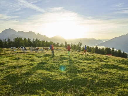 Austria, Tyrol, Mieming Plateau, hikers on alpine meadow with cows at sunrise - CVF00051