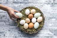 Different eggs, white, brown, light brown and green eggs - SARF03483