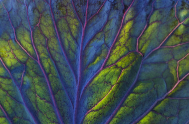 Detail of a red cabbage leaf - TCF05460