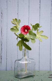 hollyhock in glass bottle - GISF00299