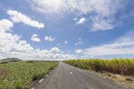 Mauritius, road, sugarcane fields - FOF09805