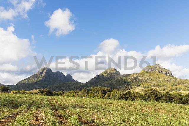 Mauritius, Highlands, sugarcane fields, Mountain Pieter Both left - FOF09811