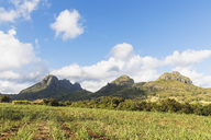 Mauritius, Highlands, sugarcane fields, Mountain Pieter Both left - FOF09811