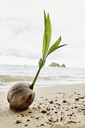 Thailand, Ko Yao Yai, coconut on the beach - RORF01094