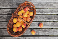 Wickerbasket of apricots - GWF05398