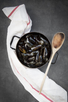 Organic blue mussels in pot, cooking spoon - LVF06617