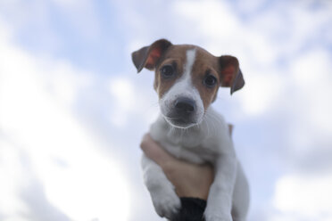 Portrait of Jack Russel Terrier puppy against sky - KMKF00145