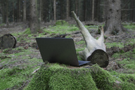 Laptop on tree stump in forest - PSTF00086