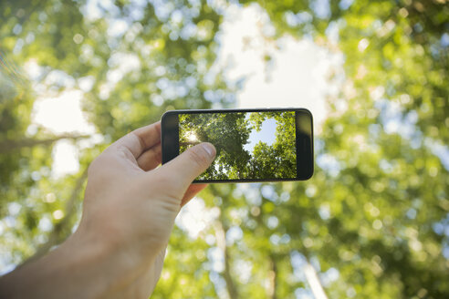 Man taking photos will cell phone in forest, close-up - ZEF14936
