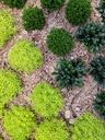 light green and dark green plants, garden - NGF00448