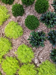light green and dark green plants, garden - NGF00448
