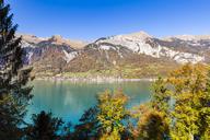 Switzerland, Bern, Bernese Oberland, Oberried, Lake Brienz - WDF04393