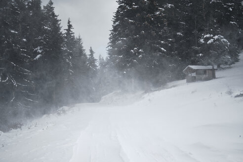 Bulgaria, road with blizzard in forest - BZF00380
