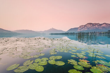 Austria, Lake Mondsee, Water Lilies in the morning - WVF00915