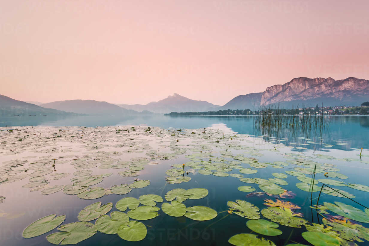 Austria, Lake Mondsee, Water Lilies in the morning - WVF00915 - Valentin Weinhäupl/Westend61