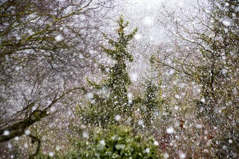 Germany, Wuerzburg, allotment, snow fall - NDF00736