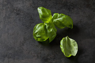Basil leaves on dark metal - CSF28839