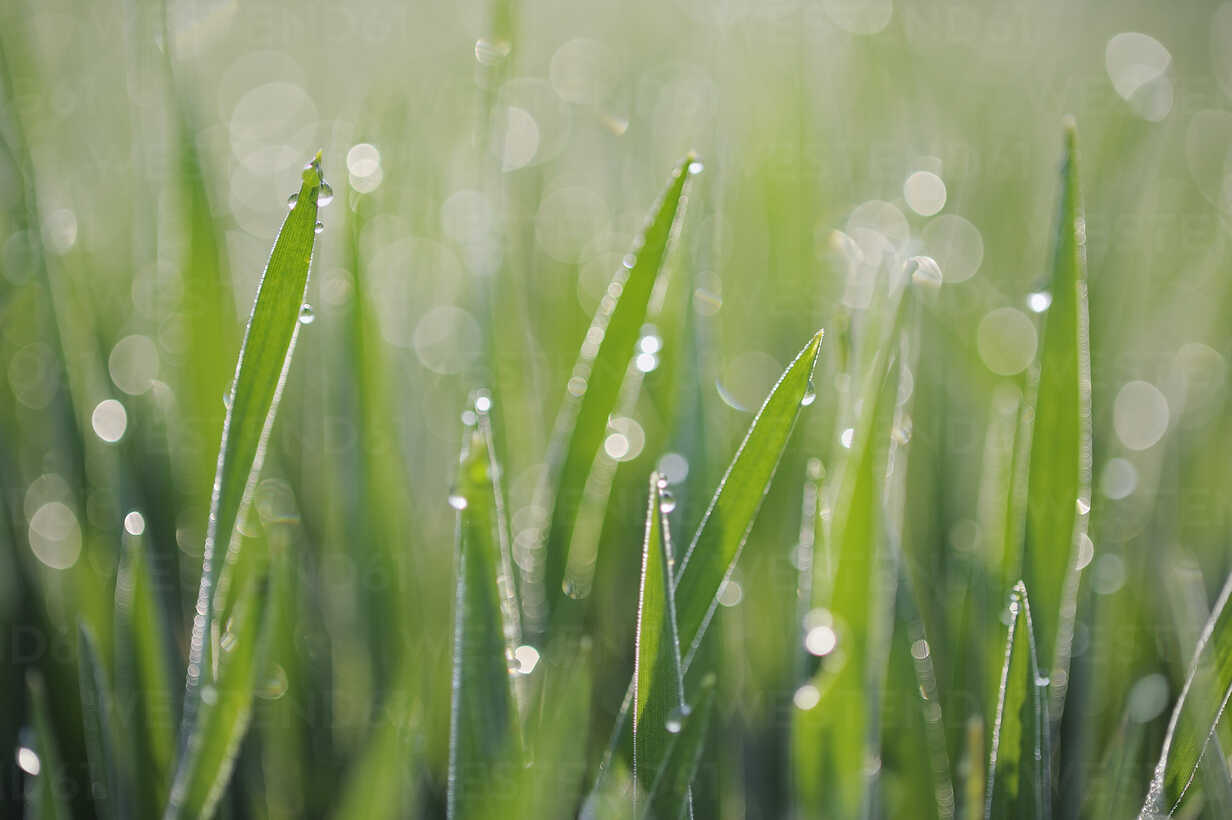 Dew on grass selective focus, close up - RUEF01793 - Martin Rügner/Westend61