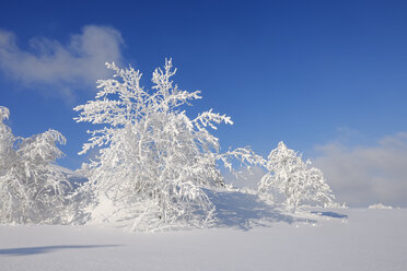 Germany, Saxony, Ore Mountains, snow covered trees in winter landscape - RUEF01799