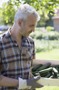Mature man with crate of harvested cucumbers at vegetable garden - FSIF00178