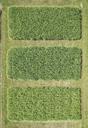 Full frame aerial view of crops growing in field, Stuttgart, Baden-Wuerttemberg, Germany - FSIF01320
