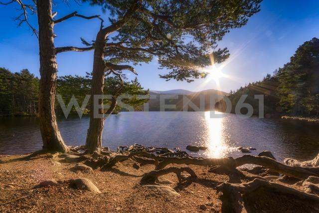 United Kingdom, Scotland, Highlands, Cairngorms National Park, Loch an Eilean, winter - SMAF00945
