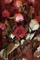 Drying roses - JTF00911