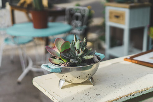 Colander used as flower pot - AFVF00022