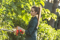 Side view of woman cutting plants with hedge clipper at yard - FSIF01395
