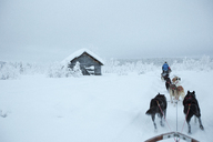 Rear view of sled dogs on snowcapped landscape against sky - FSIF01539