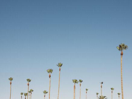 Low angle view of palm trees growing against clear sky, Coalinga, California, USA - FSIF01812