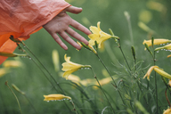 Cropped image of hand touching wet yellow flowers during rainy season - FSIF01821