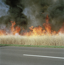 A fire burning on a roadside - FSIF02136