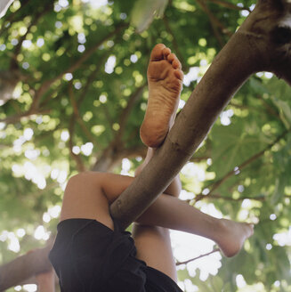Child's legs wrapped around a tree branch - FSIF02391