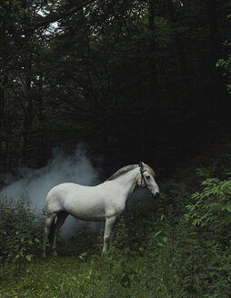 A white horse in a forest - FSIF02473