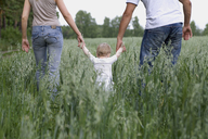 Two parents walking in a field with their daughter - FSIF02706