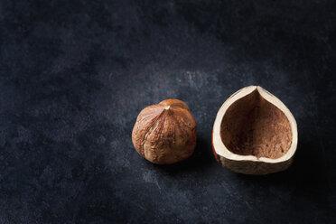 Hazelnut and shell on dark ground - CSF28938