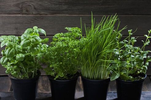 Four flowerpots with various herbs - CSF28968