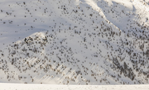 Switzerland, Engadin, side of a mountain with rocks and trees growing from the snow - MRAF00264