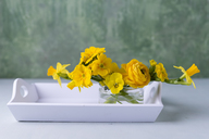 Persian buttercup, daffodil, primrose and horned violet in glass on wooden tray - MYF02014