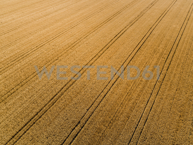 Serbia, Vojvodina, agricultural fields, aerial view at summer season - NOF00003