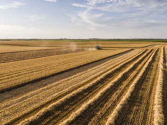 Serbia, Vojvodina. Combine harvester on a field of wheat, aerial view - NOF00015