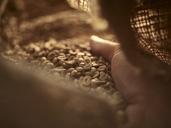 Man's hand checking green coffee in gunny bag, close-up - CVF00175