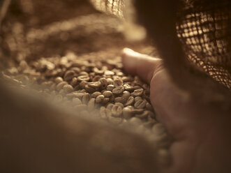 Man's hand checking green coffee in gunny bag, close-up - CVF00175